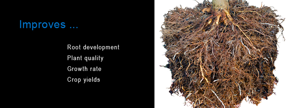 Improves Root Development